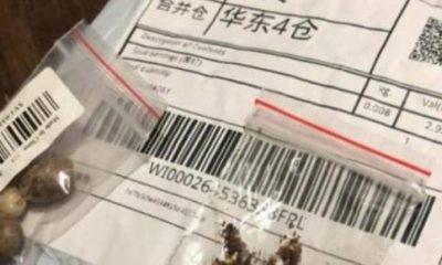 Misteriosas sementes vindas da China preocupam autoridades brasileiras