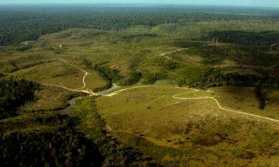 Preservação da Amazônia esteve em debate no Senado em 2020