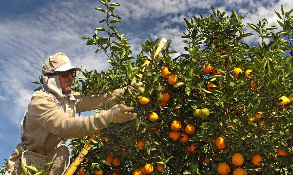Orange juice exports from Brazil up 17% -Árabe -Arab News Agency (ANBA)