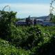 Avião com vacinas da Covid-19 bate em jumentos durante pouso na Bahia