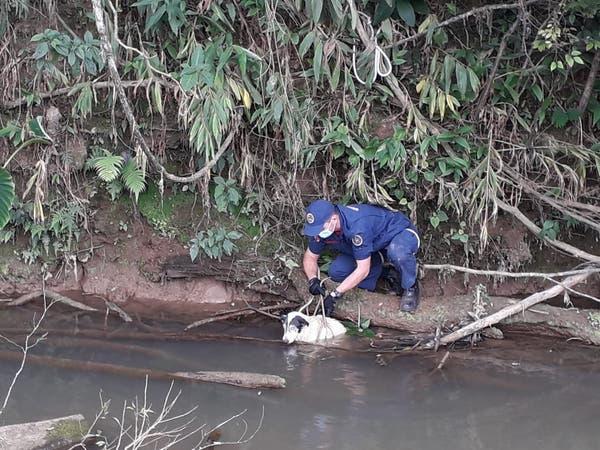 Cachorro cego cai no rio e mobiliza resgate dos bombeiros no Alto Vale; veja vídeo | NSC Total