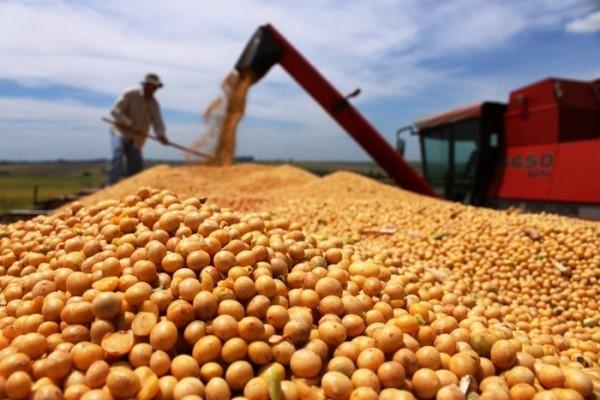 SAFRA: Produção de grãos deve atingir 2,31 milhões de toneladas em Rondônia