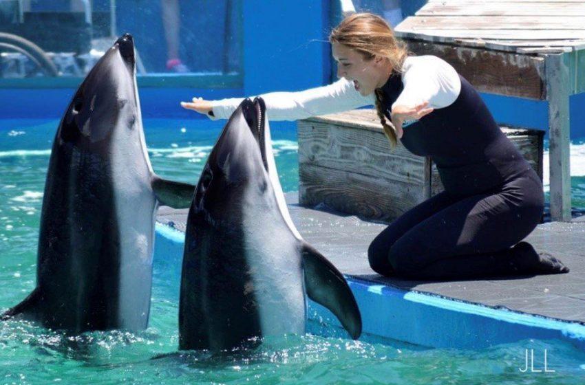 Cinco golfinhos e um leão-marinho morrem no Miami Seaquarium e ativistas buscam explicações