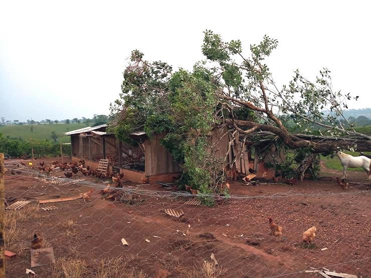 Alta Floresta: Vendaval destrói Agroindústria Avícola 2N